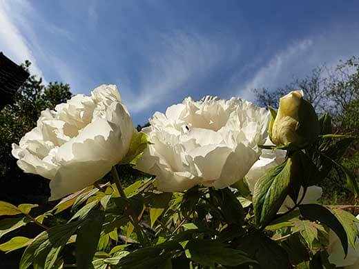Blume mit blauem Himmel